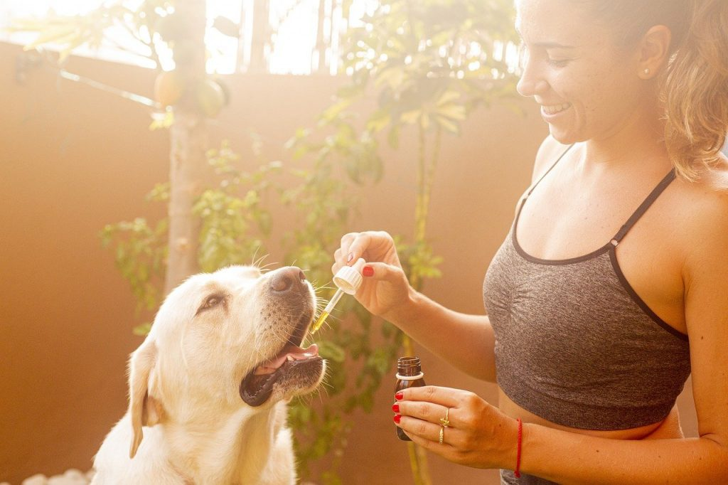 cbd oil, dog, pet