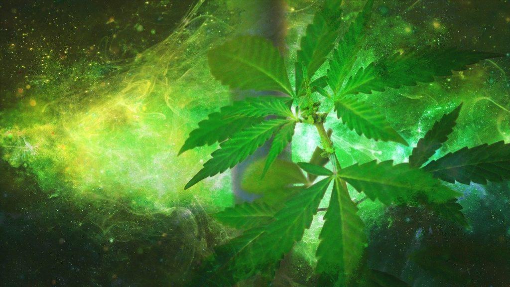 marijuana, weed, hemp