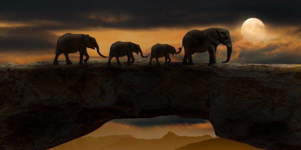 elephants, animals, bridge